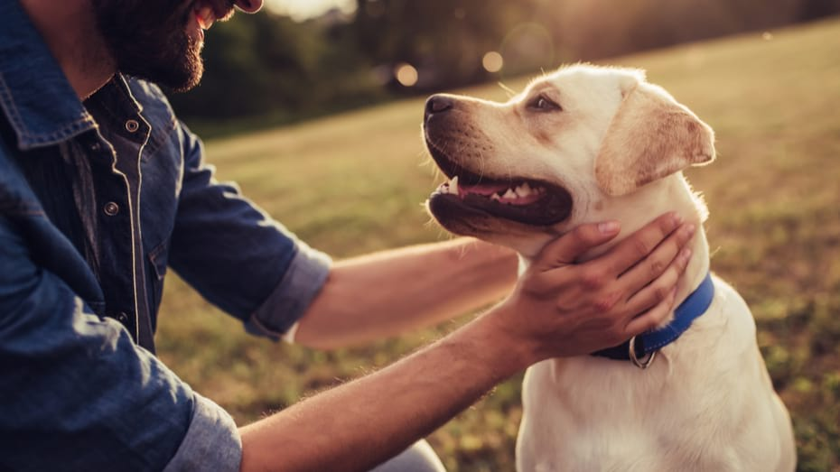 Una Guia de Aseguranza para Dueños de Mascotas